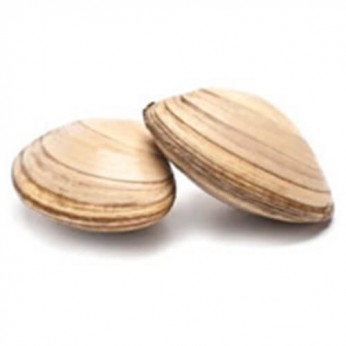 2 clams