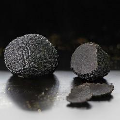 Truffes noires du Périgord brossées 1er choix